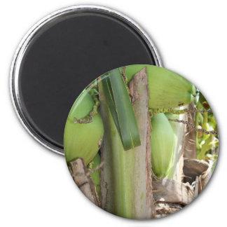 緑のココナッツも マグネット