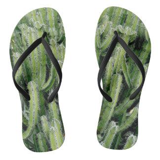 緑のサボテンのサボテンの植物 ビーチサンダル