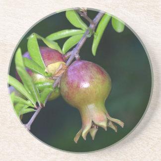 緑のザクロのフルーツ コースター