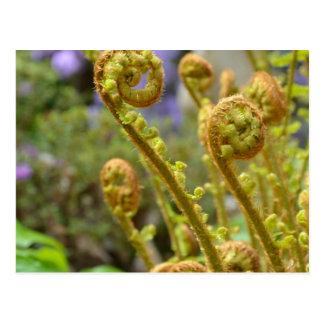 緑のシダ類の葉 ポストカード