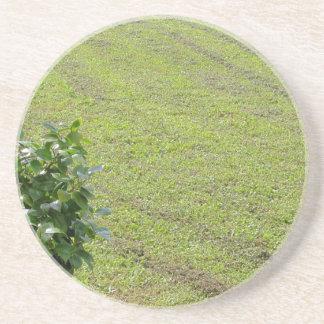 緑のツバキの植物 コースター