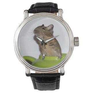 緑のティーポットの好奇心が強いDegu 腕時計