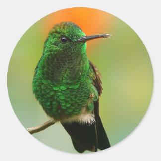 緑のハチドリのステッカー ラウンドシール