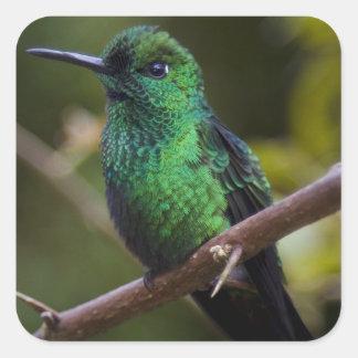 緑のハチドリコスタリカ スクエアシール