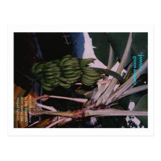 緑のバナナジャマイカ ポストカード