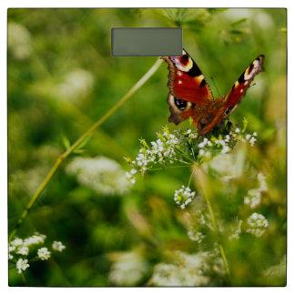 緑の夏草原の孔雀蝶 体重計