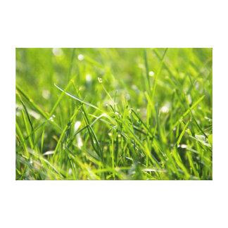 緑の新しい朝の草 キャンバスプリント