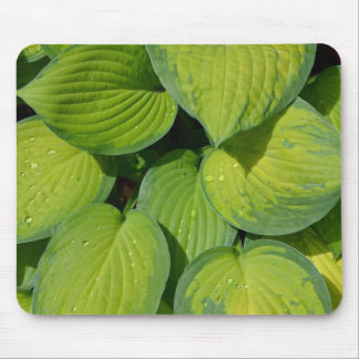 緑の春のhostAの植物の葉 マウスパッド