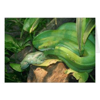 緑の木の大蛇および白のアマガエル カード