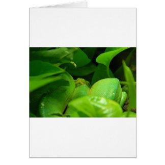 緑の木の大蛇のヘビ カード