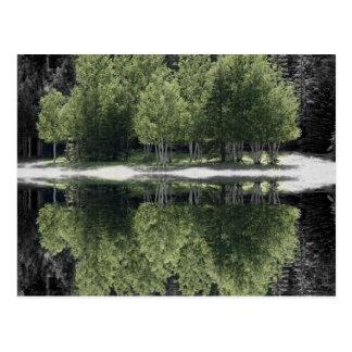 緑の木 ポストカード