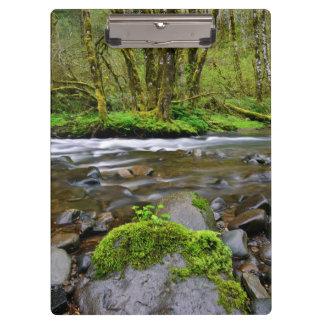 緑の森林、オレゴンの川 クリップボード