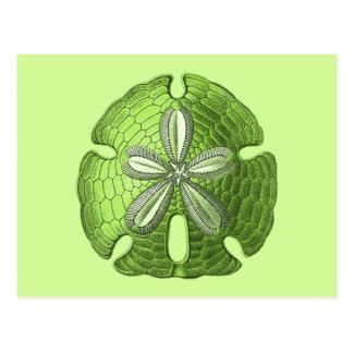 緑の砂ドル ポストカード