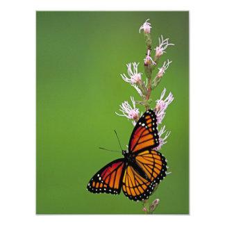 緑の背景のマダラチョウそして花 フォトプリント