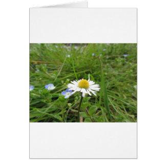 緑の背景の独身のな白いデイジーの花 カード