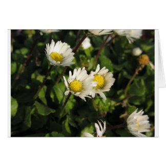 緑の背景の白いデイジーの花 カード