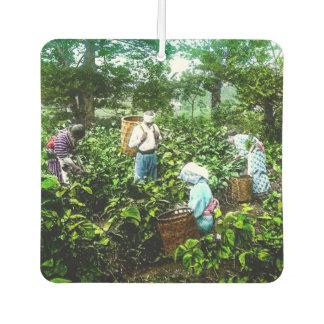 緑の茶葉の古い日本農家の収穫 カーエアーフレッシュナー