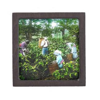 緑の茶葉の古い日本農家の収穫 ギフトボックス