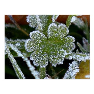 緑の草木の霜の降りたな露 ポストカード