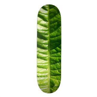 緑の葉のスケートボード 21.6CM オールドスクールスケートボードデッキ
