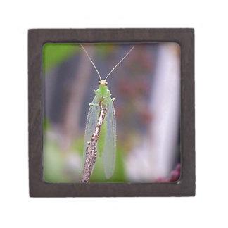 緑の虫 ギフトボックス