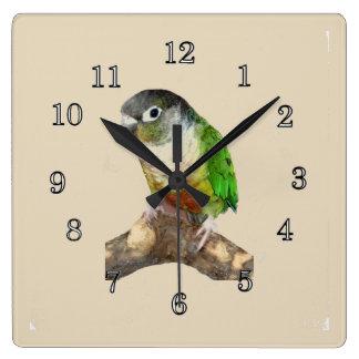 緑の頬Conure スクエア壁時計