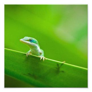 緑のAnoleのトカゲの遭遇の芸術の写真撮影 フォトプリント