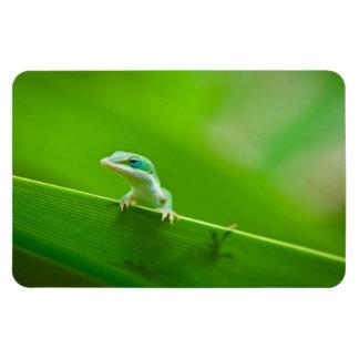 緑のAnoleのトカゲの遭遇の芸術の写真撮影 マグネット