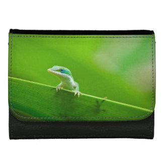 緑のAnoleのトカゲの遭遇 ウォレット