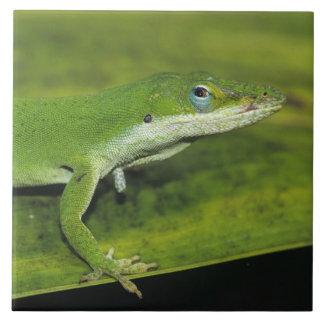 緑のAnoleのAnolisのcarolinensis、やしの大人 タイル