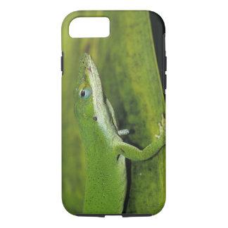 緑のAnoleのAnolisのcarolinensis、やしの大人 iPhone 8/7ケース