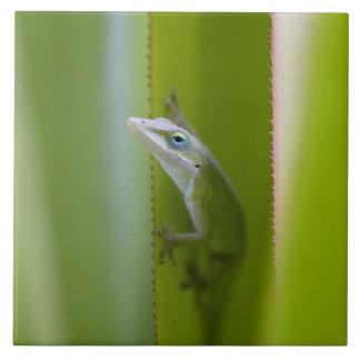 緑のanoleはarborealトカゲです タイル