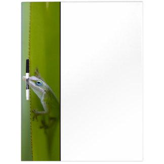 緑のanoleはarborealトカゲです ホワイトボード