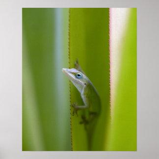緑のanoleはarborealトカゲです ポスター