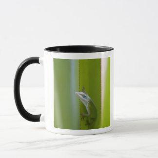 緑のanoleはarborealトカゲです マグカップ