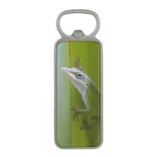 緑のanoleはarborealトカゲです マグネット栓抜き