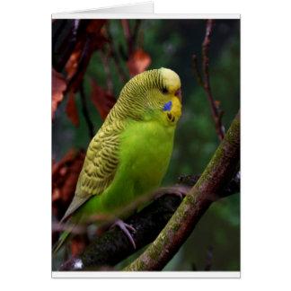 緑のBudgie カード