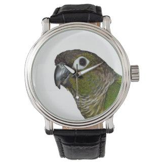 緑のCheeked Conure 腕時計