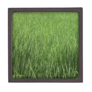 緑のpadiの分野 ギフトボックス