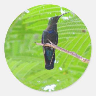 緑のThroatedカリブ族のハチドリ ラウンドシール
