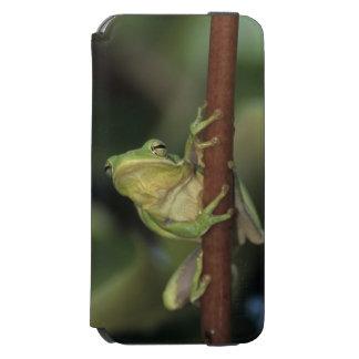 緑のTreefrogのcinereaアマガエル属黄色の大人 Incipio Watson™ iPhone 6 ウォレットケース