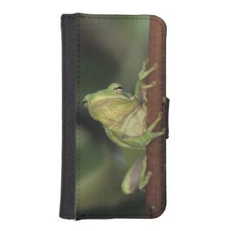 緑のTreefrogのcinereaアマガエル属黄色の大人 iPhoneSE/5/5sウォレットケース