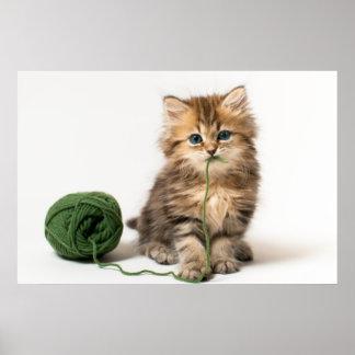 緑ヤーンを持つ子ネコ ポスター
