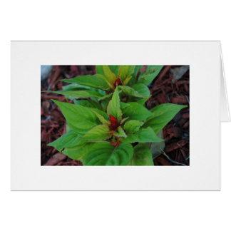 緑植物 カード