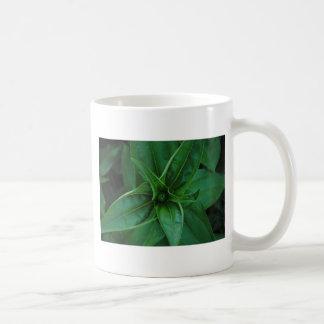 緑植物 コーヒーマグカップ