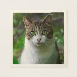 緑色の目の猫のポートレート スタンダードカクテルナプキン