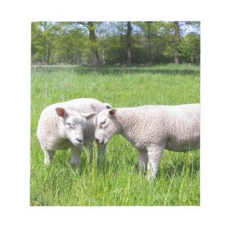 緑草原で一緒に遊んでいる2頭の白い子ヒツジ ノートパッド