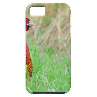 緑草原で直立したカラフルなキジのオンドリ iPhone SE/5/5s ケース