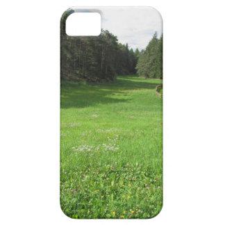 緑草原との高山の景色 iPhone SE/5/5s ケース