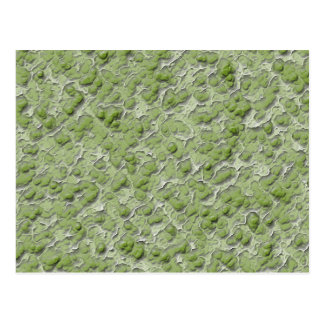 緑藻類の効果パターン ポストカード